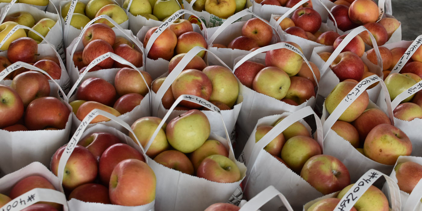 Chesterhill Produce Auction Order Buying header image of apples in bags.